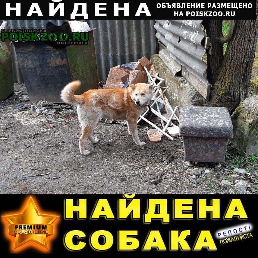 Найдена собака Зеленогорск (Ленинградская обл.)