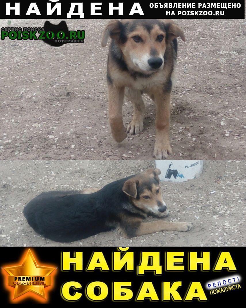 Найдена собака кобель Хабаровск