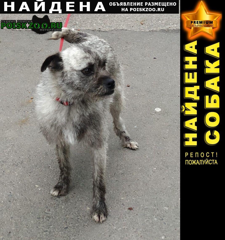 Найдена собака в районе ул. шевченко Краснодар