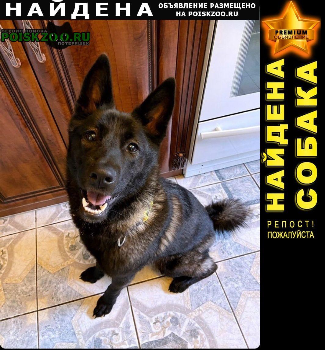 Найдена собака чёрная, метис лайки Москва