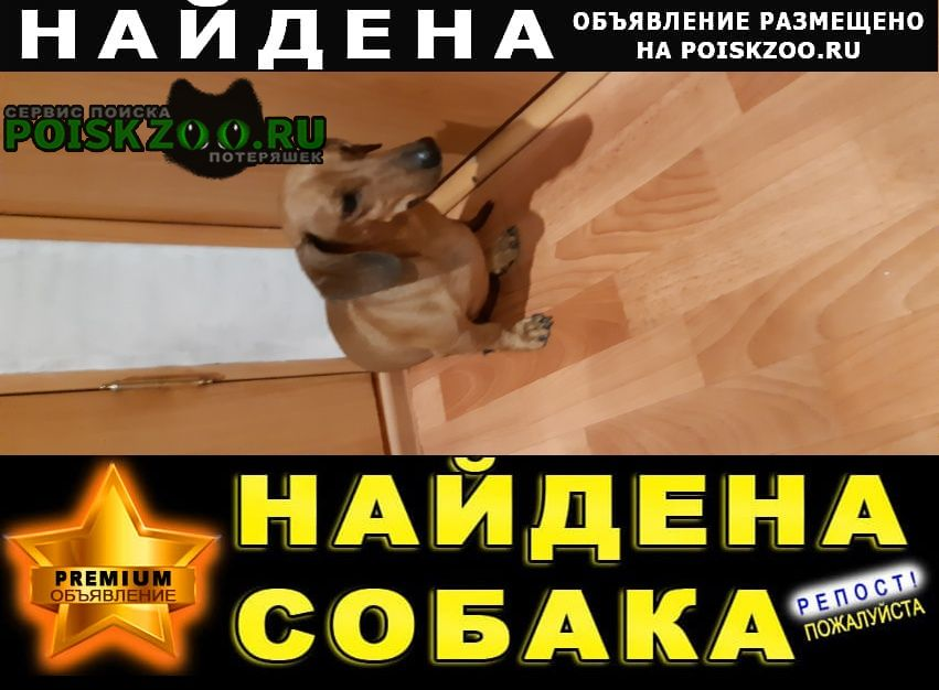 Найдена собака подобрана Тюмень