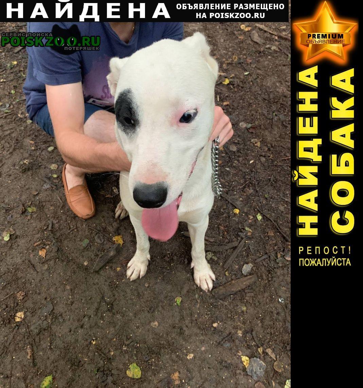Найдена собака кобель белый с чёрным пятном на глазу Москва