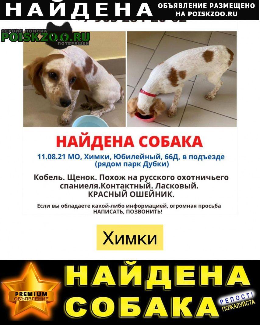 Найдена собака кобель щенок метис спаниеля/бигля Химки