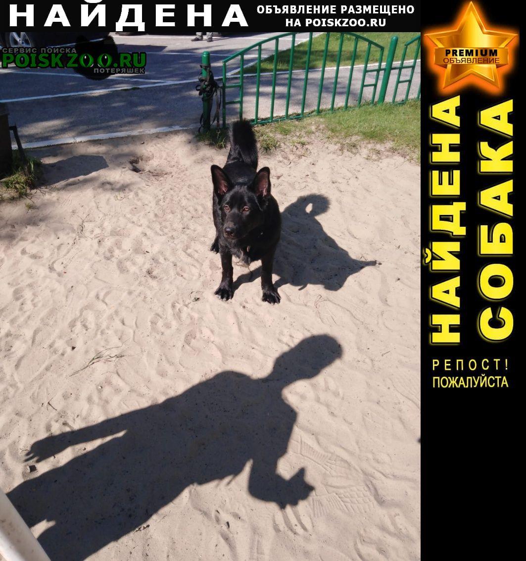 Найдена собака черного цвета. Сургут