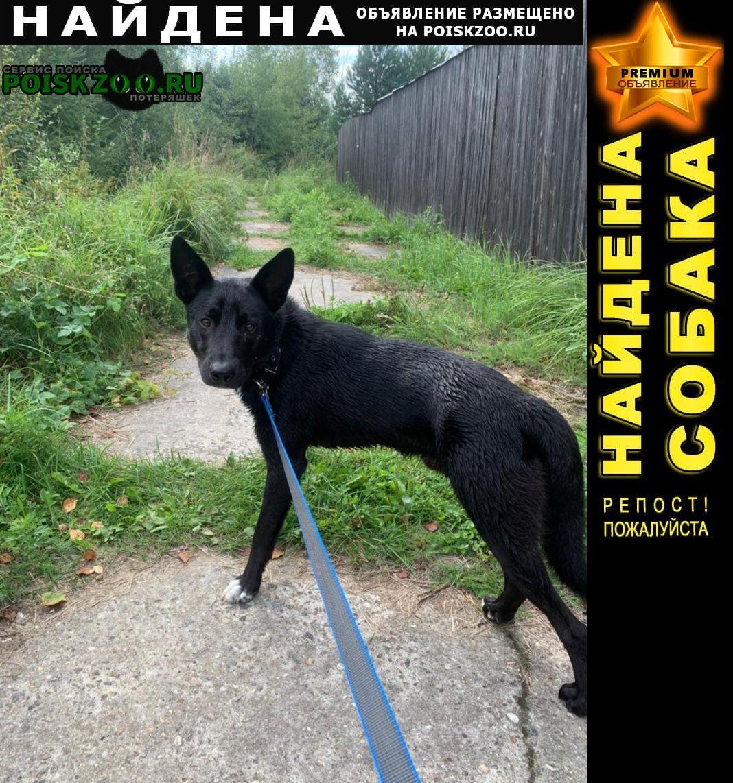 Найдена собака кобель Сергиев Посад