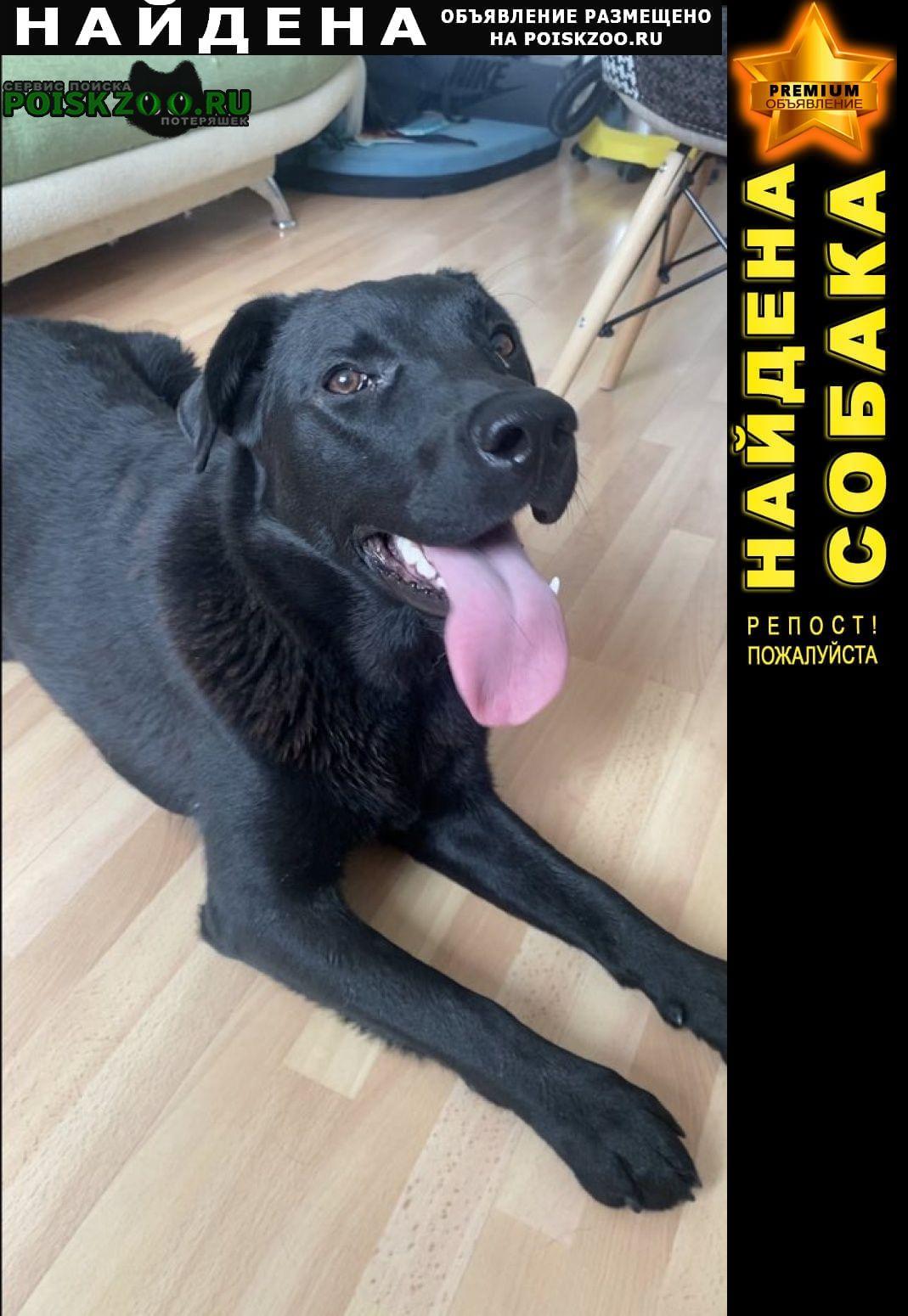 Найдена собака метис лабрадора Москва