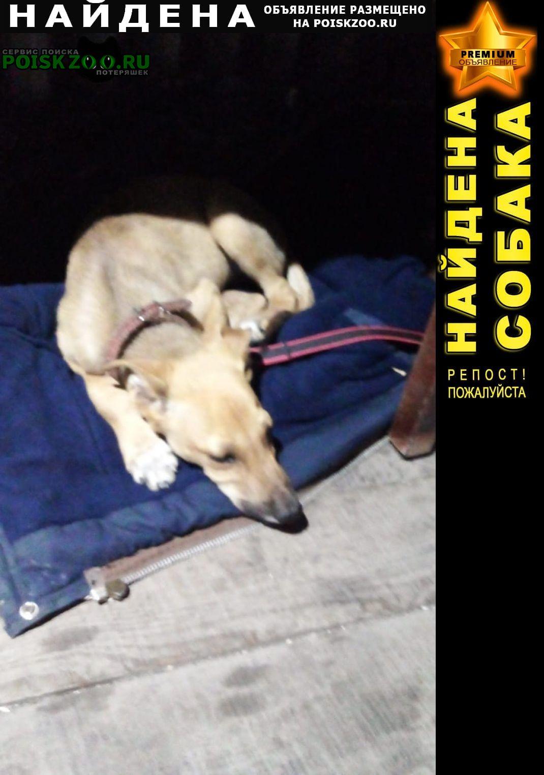 Найдена собака кобель красавчик Липецк