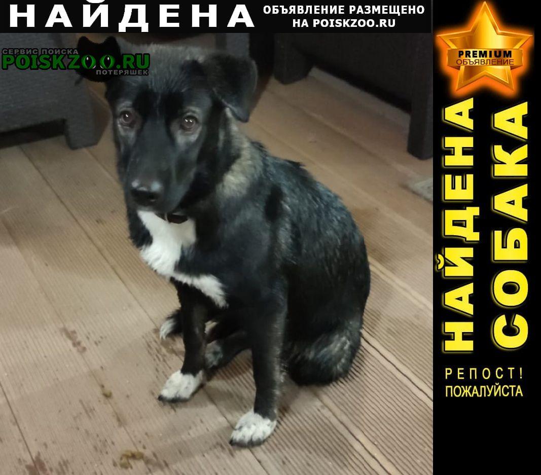 Найдена собака ильинский раменский район Раменское