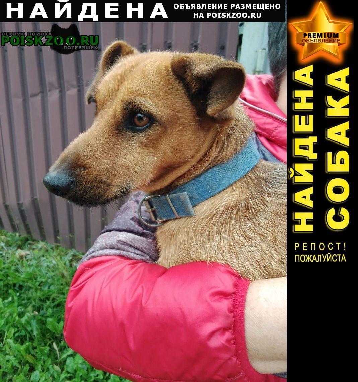 Найдена собака кобель Львовский