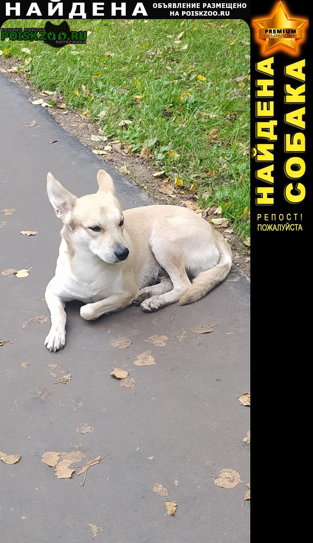 Найдена собака кобель собака молодая Москва