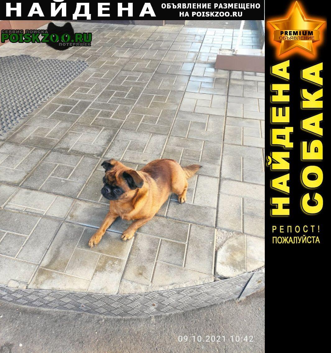 Найдена собака Подольск