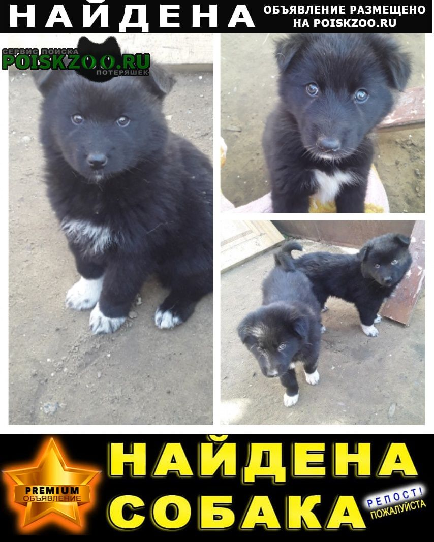 Найдена собака щенок Иркутск