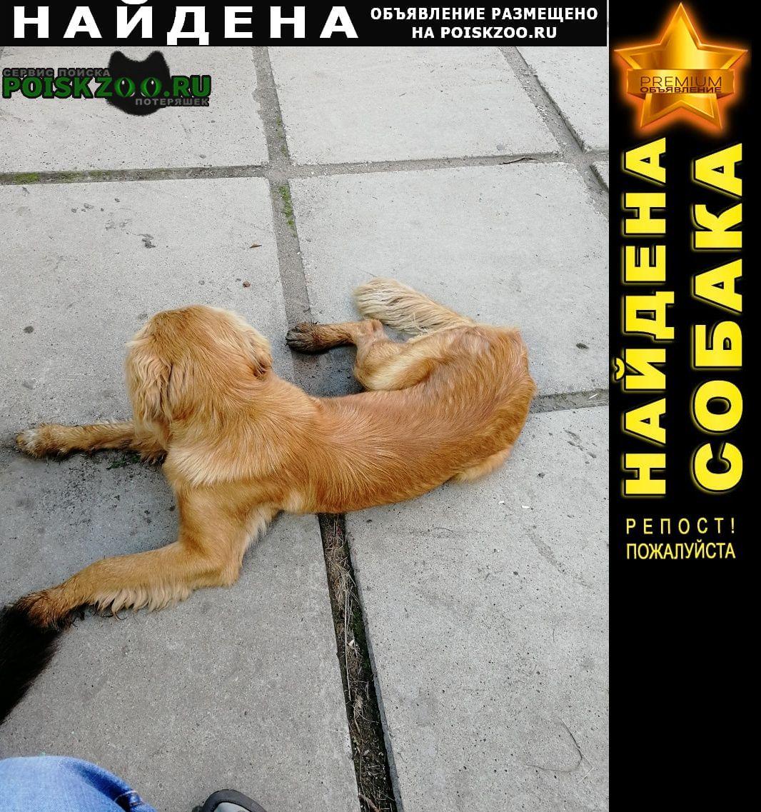 Найдена собака потеряшка кобель Иркутск