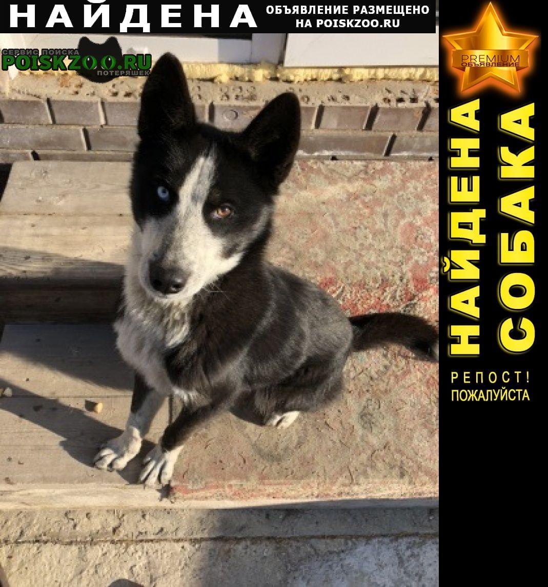 Найдена собака кобель Иркутск