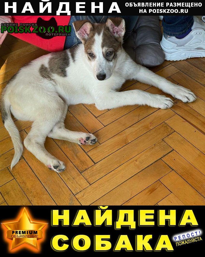 Найдена собака щенок девочка примерно 3 месяца Москва