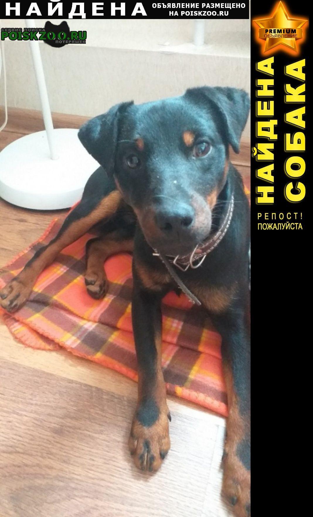 Найдена собака кобель нахичевань Ростов-на-Дону
