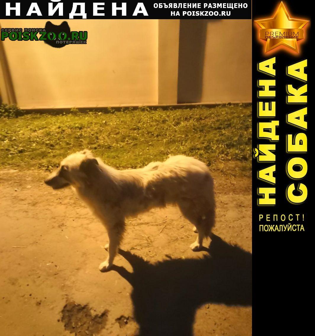 Найдена собака белого цвета Домодедово