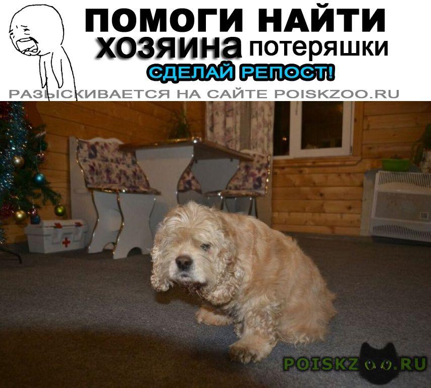 Найдена собака 27.12 американский спаниель сука свао г.Москва