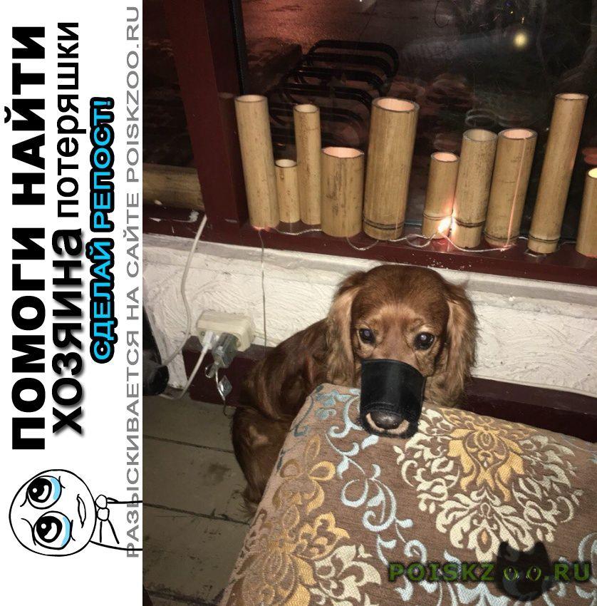 Найдена собака кобель 13.10 спаниель измайлово г.Москва