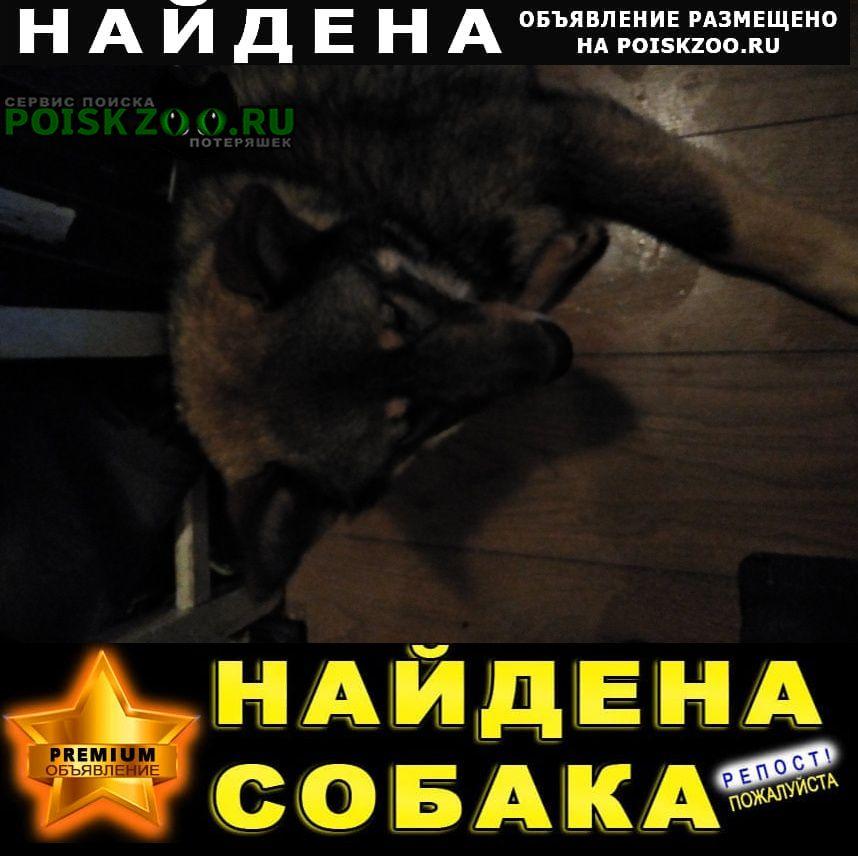 Найдена собака кобель мальчик, примерно 10 месяцев Москва