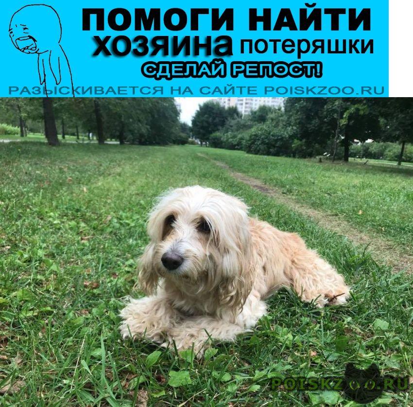 Найдена собака 7.08 марьинский парк, спаниель сука г.Москва