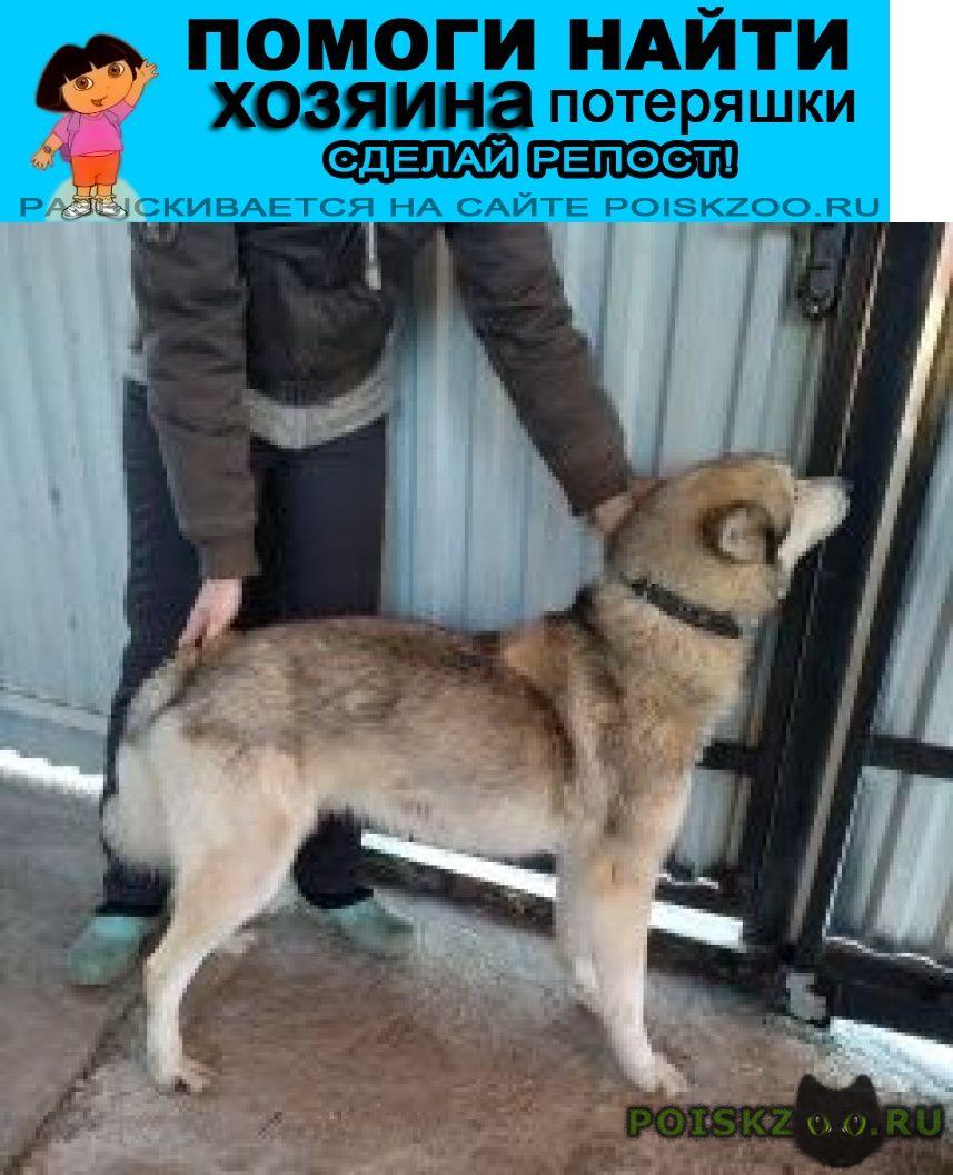 Найдена собака кобель нашли вчера. г.Москва