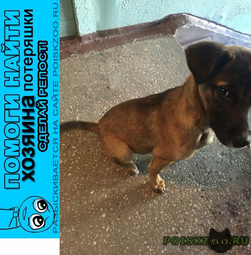 Найдена собака кобель в дзержинском р-не г.Новосибирск