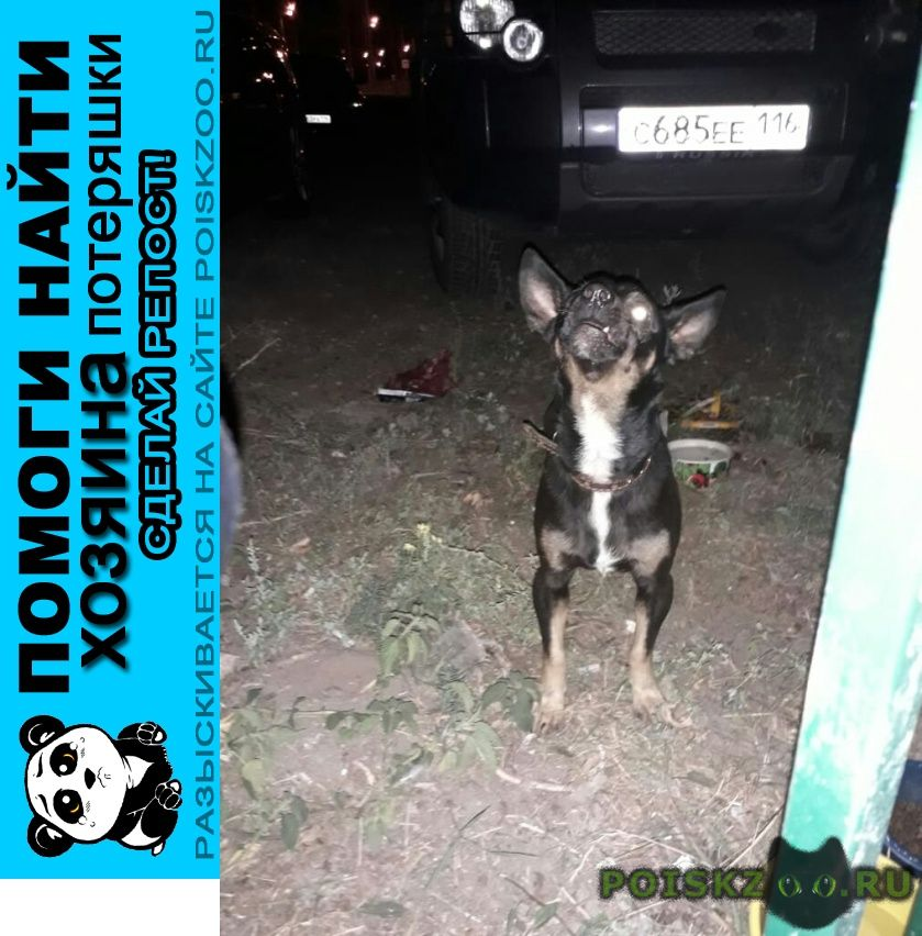 Найдена собака кобель, похож на той терьера г.Казань