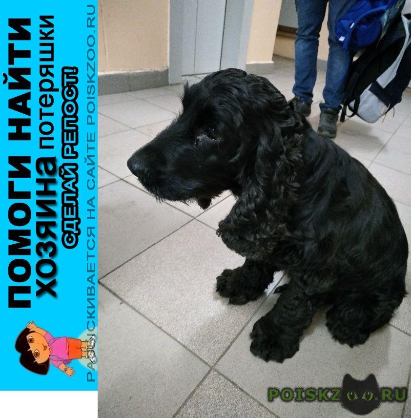 Найдена собака 14.09 чертаново черный спаниель г.Москва