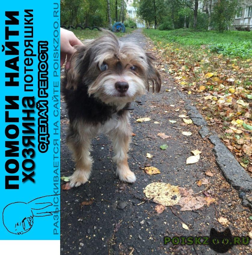 Найдена собака кобель на ул. федосеенко (сормово) г.Нижний Новгород