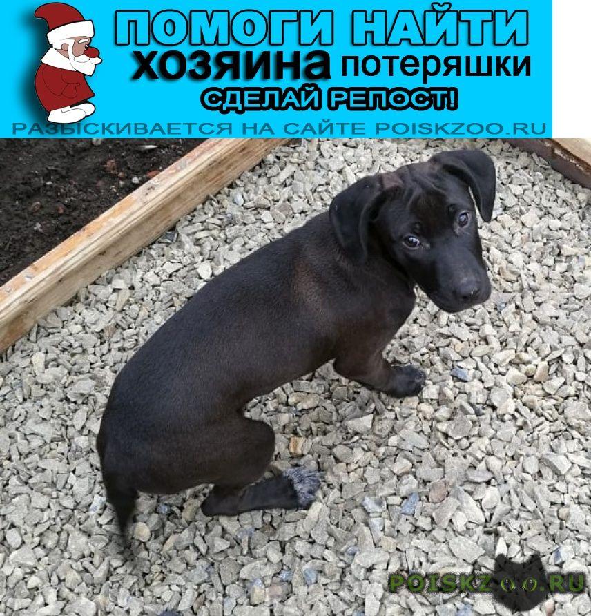 Найдена собака г.Ростов-на-Дону