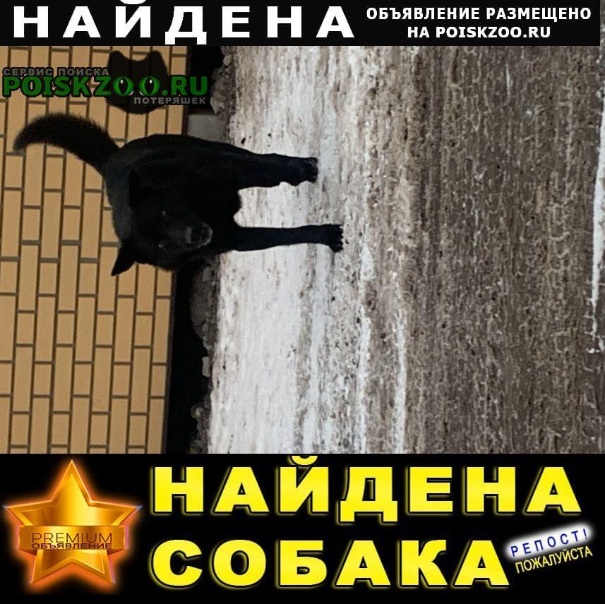 Найдена собака у магазина в александровке Заокский