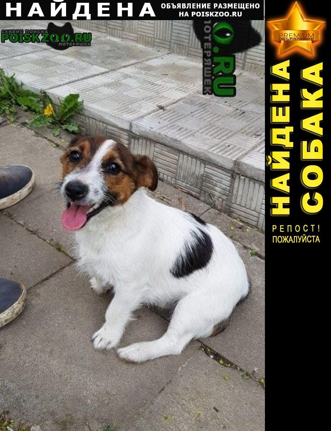 Найдена собака Сходня