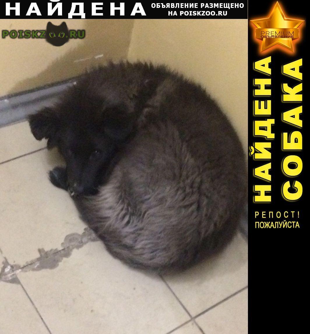 Найдена собака г.Иркутск