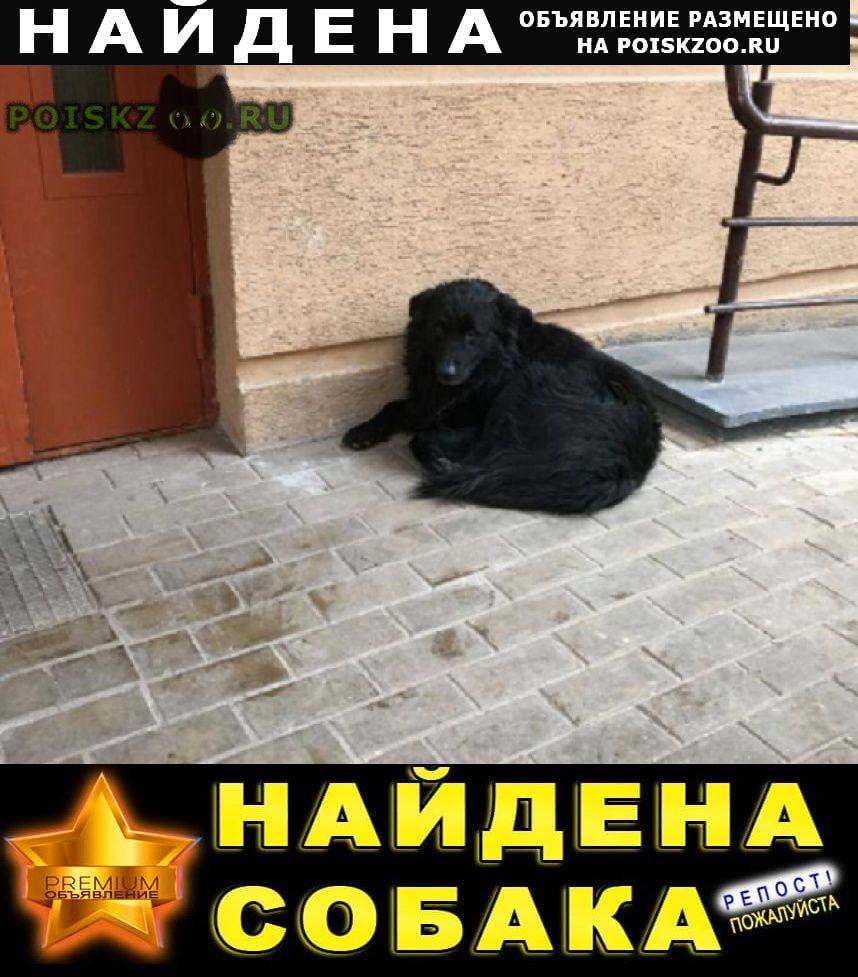 Найдена собака кобель черный г.Химки