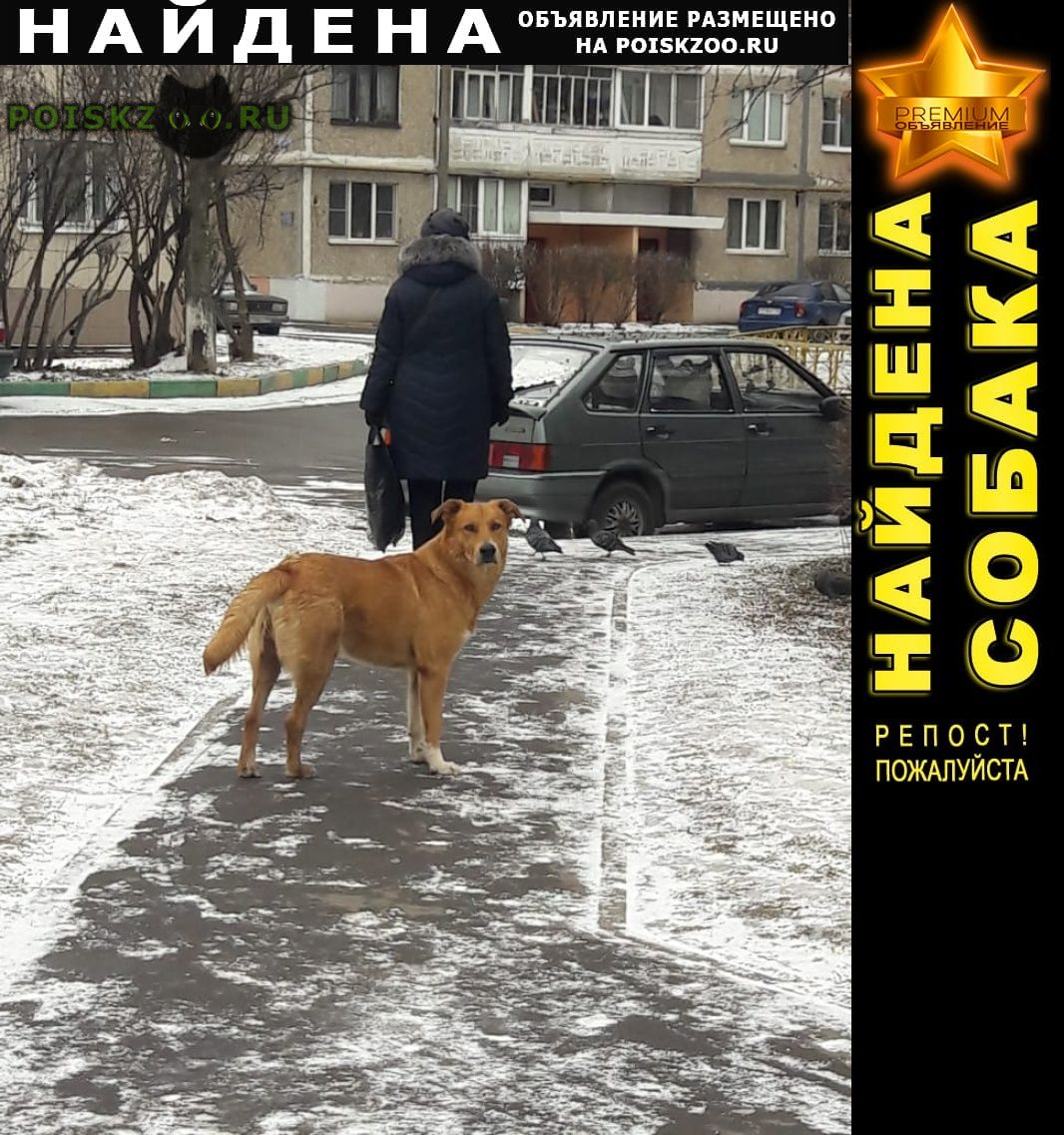 Найдена собака пес г.Домодедово
