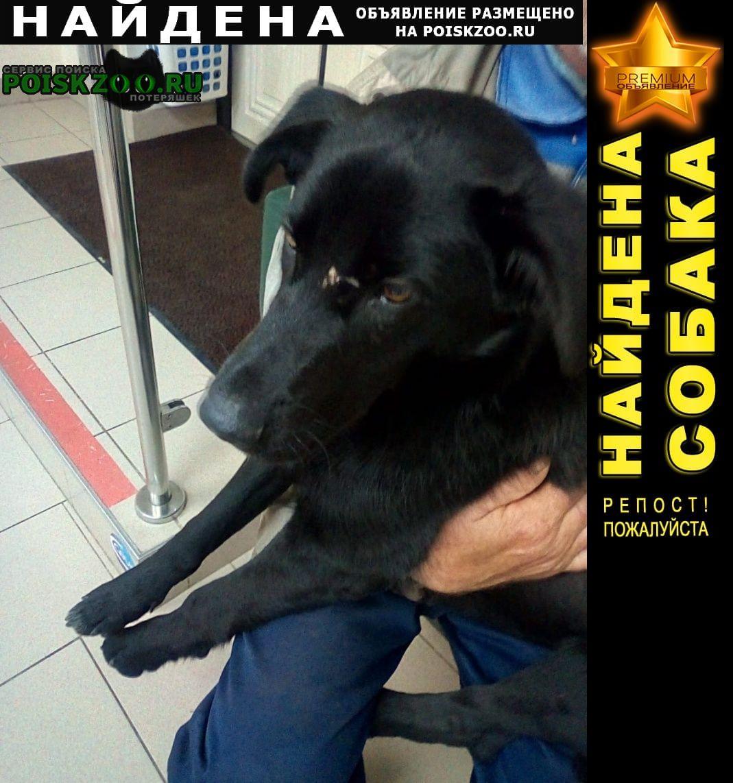 Воскресенск Найдена собака
