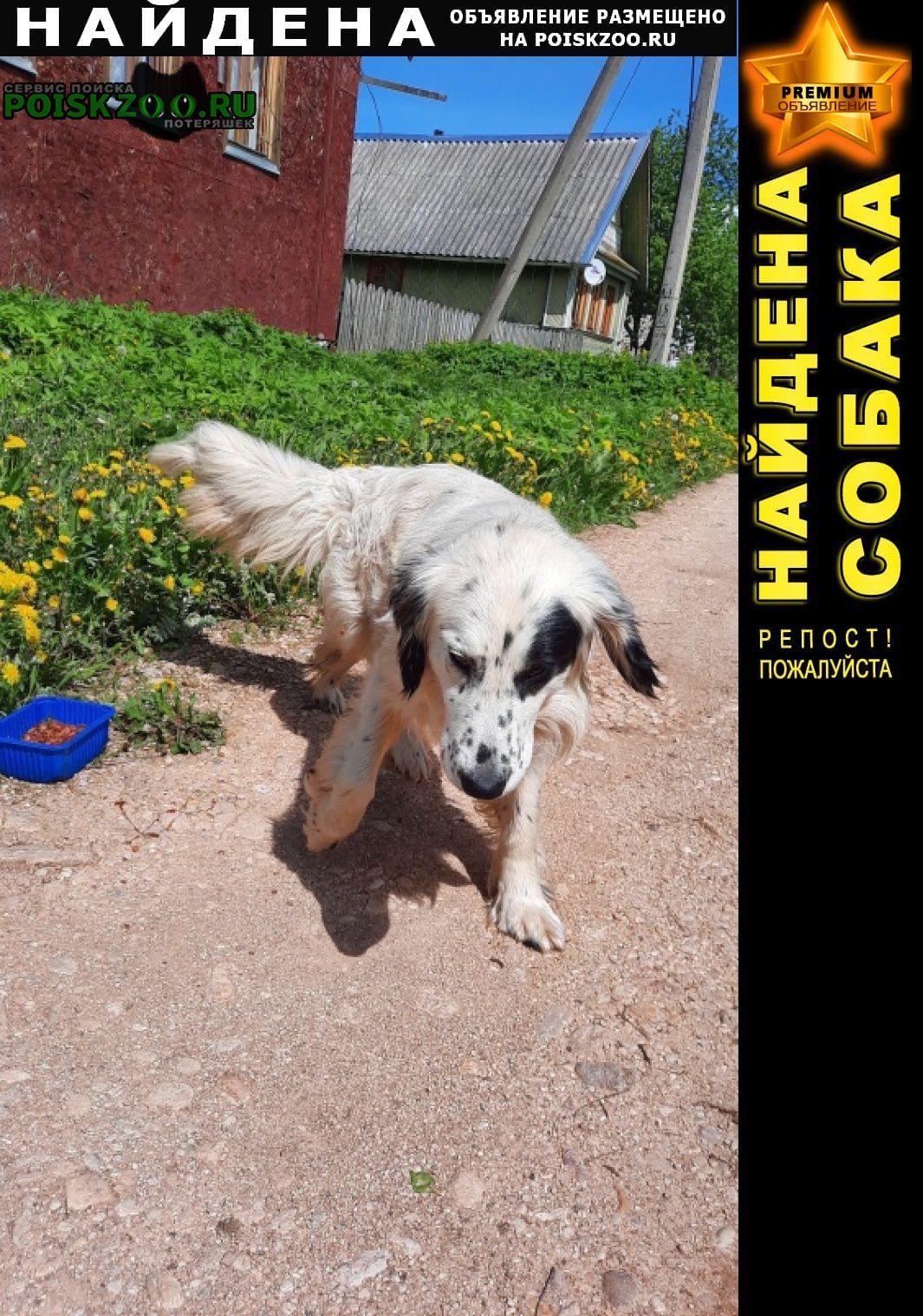 Найдена собака кобель Сольцы
