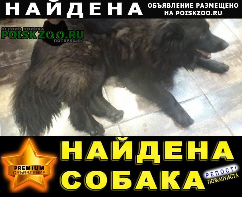 Красногорск Найдена собака