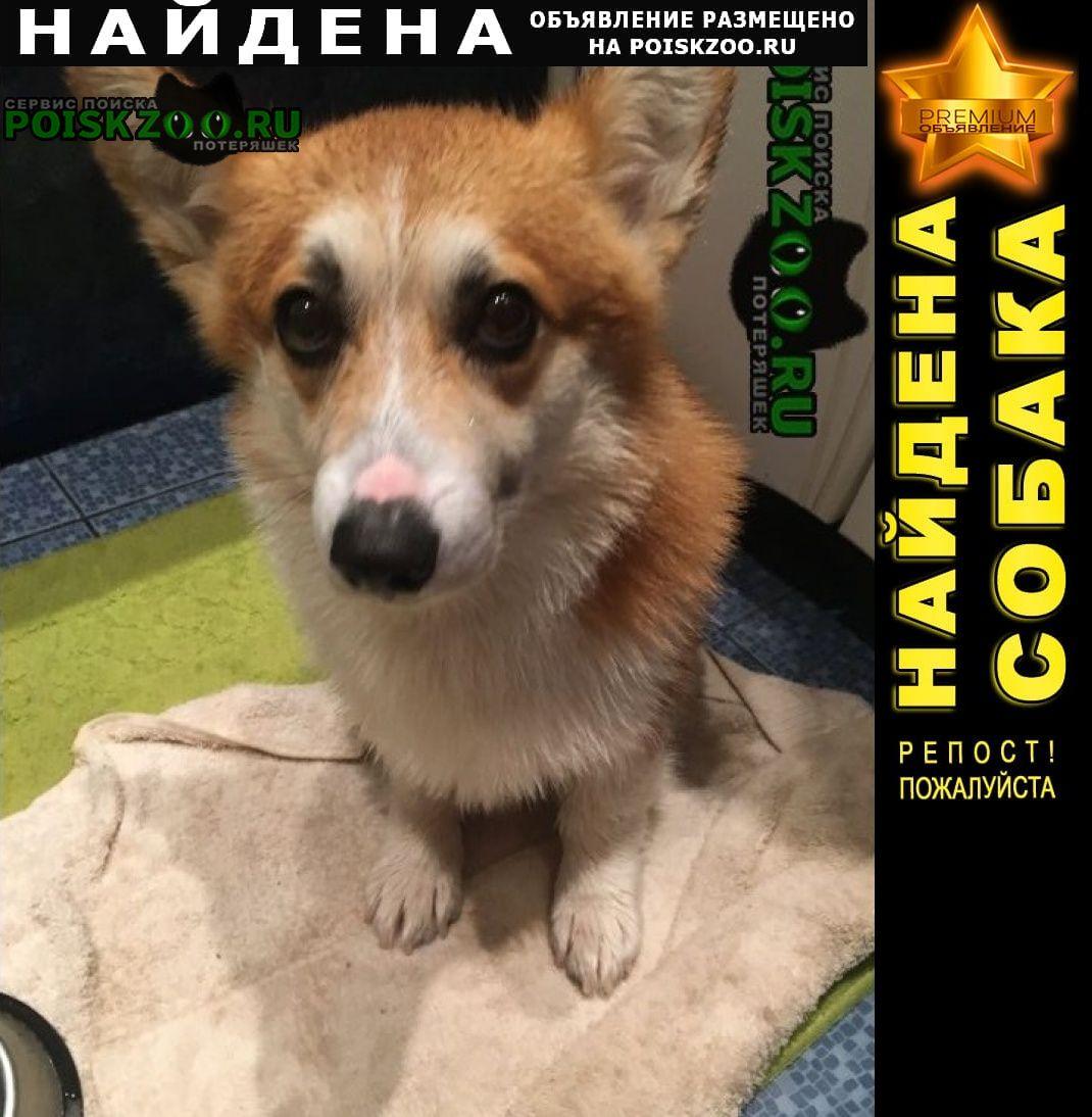 Найдена собака кобель Красногорск
