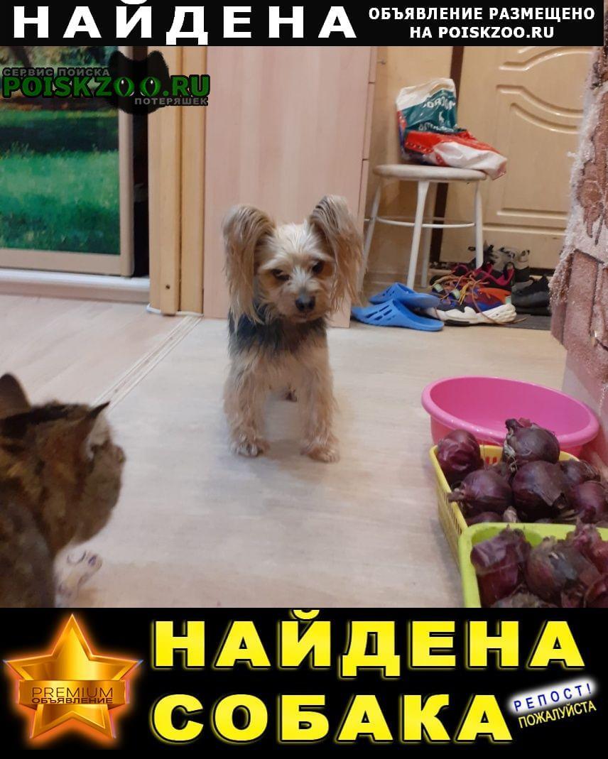 Екатеринбург Найдена собака