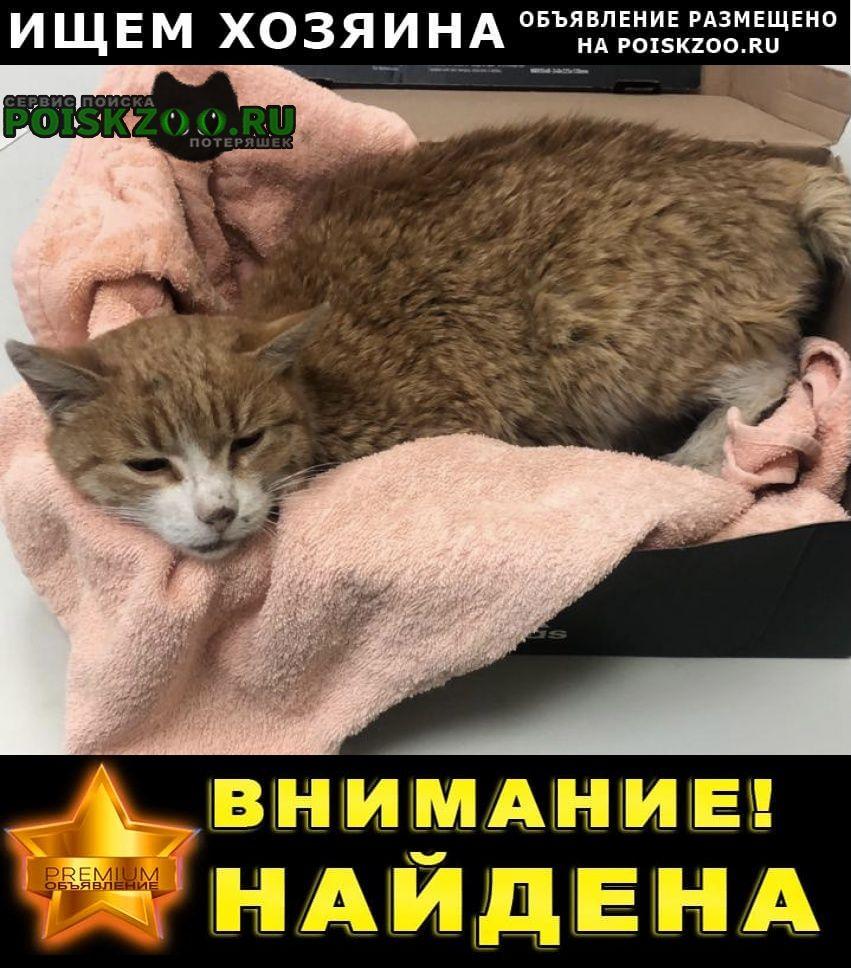 Найдена кошка кот Мытищи