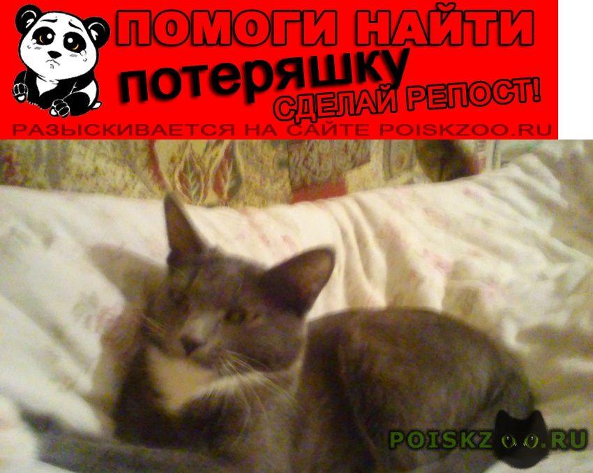 Пропала кошка прошу помощи  максимальный репост  г.Чехов