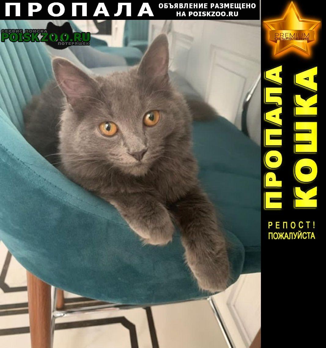 Пропала кошка русская голубая. Москва