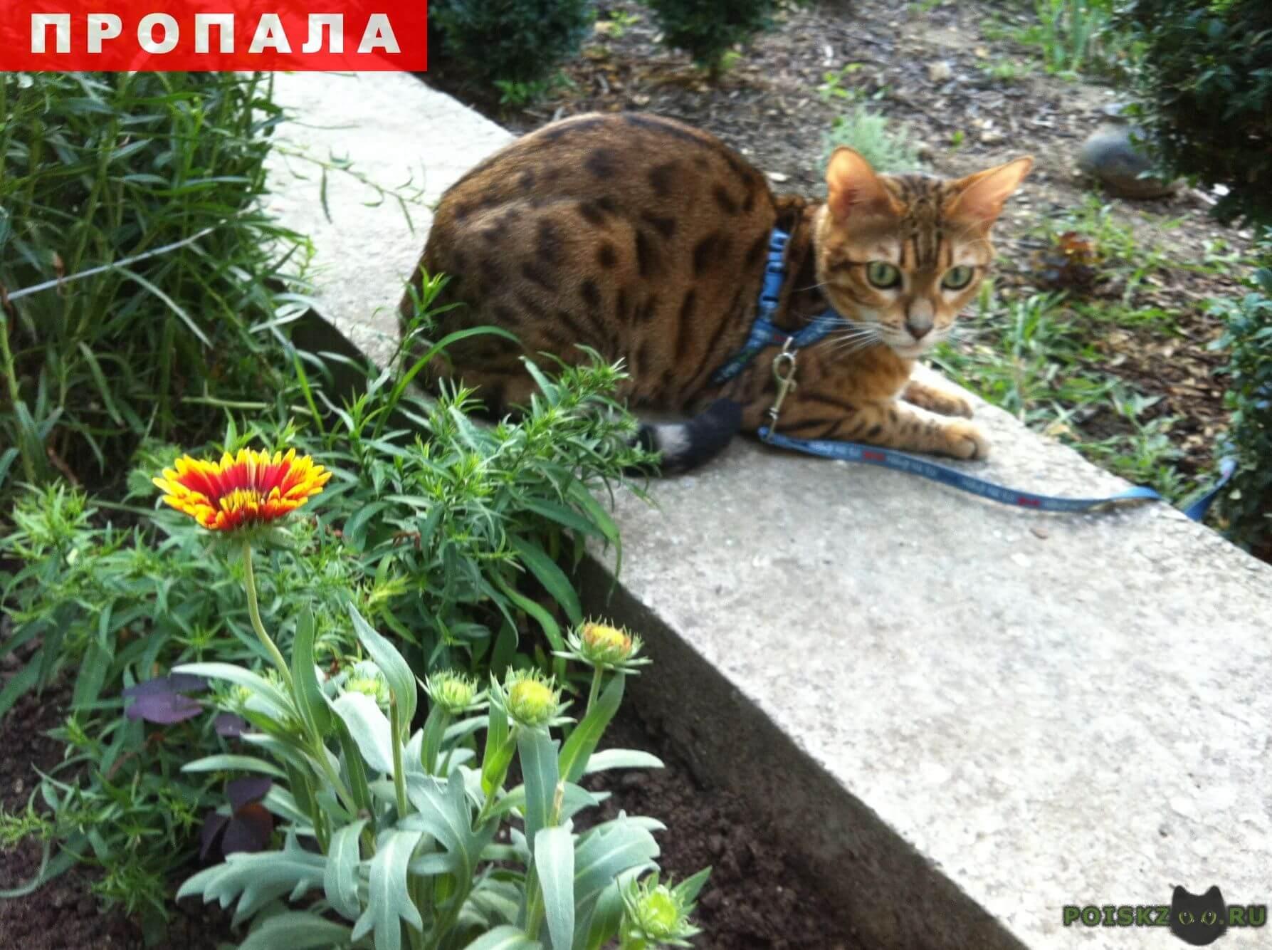 Пропала кошка кошечка г.Красногорск