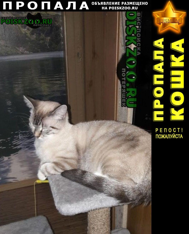 Пропала кошка г.Калининград (Кенигсберг)
