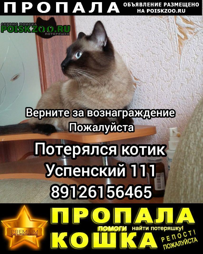 Пропал кот Верхняя Пышма