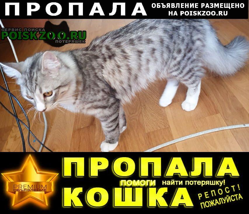Пропал котик в районе жк екатерининский Ростов-на-Дону