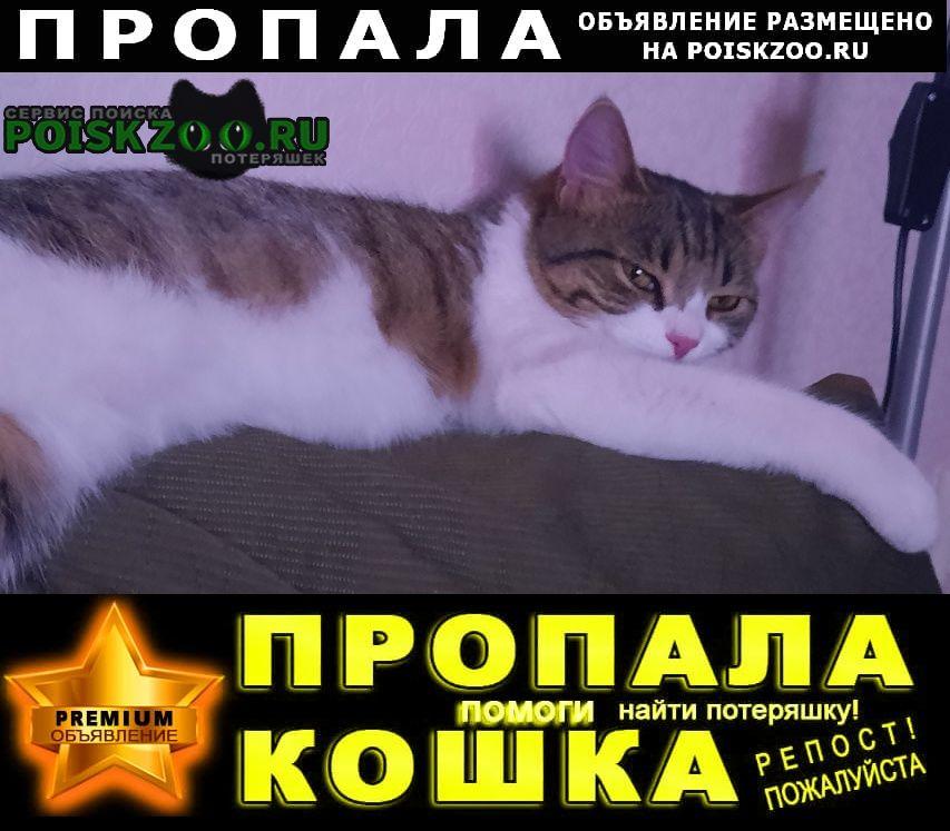 Пропала кошка. в парке победы Зеленоград