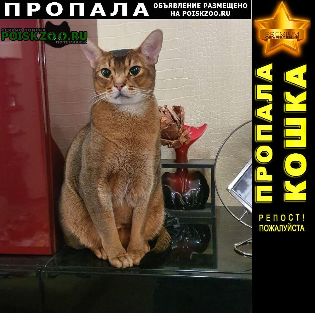 Пропал кот г.Домодедово